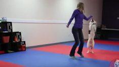 애견 훈련사와 강아지의 환상적인 '콜라보'