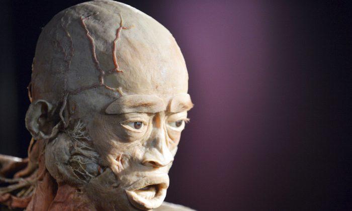 플라스티네이션(Plastination)이란 에 전시되는 인체 표본에 사용되는 기술로, 액체 실리콘을 인체에 주입하여 사후 부패를 막는 과정을 말한다. 위의 사진은 우크라이나 키예프에서 열린 '인체(The Human Body)'전에 전시된 인체 표본 사진이다. | Sergei Supinsky/AFP/Getty Images