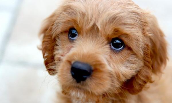 강아지에게 주는 간식에 자일리톨이 들었는지 꼭 확인해야 한다.   miaanderson/Unsplash