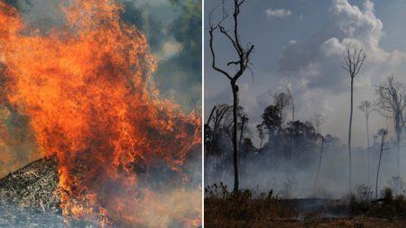 올해에만 '4만 건', 3주째 계속되는 아마존 대화재