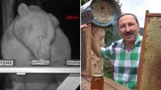 3년 동안 꿀 훔쳐먹으며 '민폐'만 끼치다 뜻밖의 '재능기부' 하게 된 곰 가족 (영상)