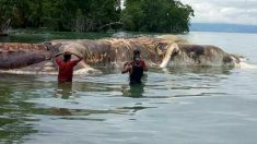 해변에 피·악취와 함께 떠오른 15m 괴생물체 사체 (소름주의)