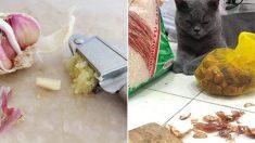 집사 옆에 찰싹 붙어 마늘 손질 구경하다 '그렁그렁' 눈물 맺힌 고양이