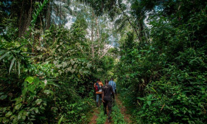 가나 동부 이스트 아킴 지역 케비 보존림에 산림 보호원들이 들어서고 있다. 2018.11.5. | Cristina Aldehuela/AFP/Getty Images