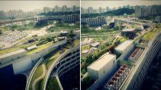 '기네스북에 올랐다' 세계에서 가장 큰 세종시 옥상 정원