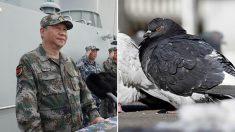 中 건국 70주년 행사 위해 '비둘기'까지 금지한다