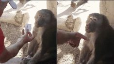 '리액션 부자' 원숭이에게 마술을 보여주면 나타나는 표정 변화