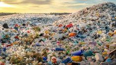 박테리아 이용한 폐플라스틱 재활용 기술로 실리콘 밸리서 창업한 10대 청소년들