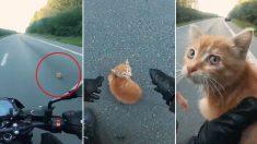 자동차 오가는 도로 한복판에 웅크린 새끼고양이 달려가 구조한 오토바이 운전자