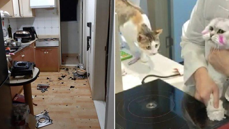 [좌] 고양이가 인덕션을 작동시켜 화재가 난 원룸 | 부산지방경찰청 제공 [우] 고양이 인덕션 작동 실험 | MBN 방송화면 캡처