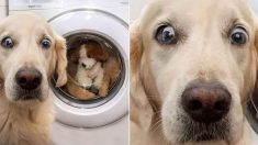 세탁기에 최애 인형 집어넣은 주인님을 바라보는 댕댕이의 현실 표정