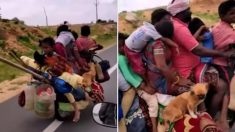오토바이 한 대에 동물 4마리와 가족 7명 탑승…'놀라운 인도'