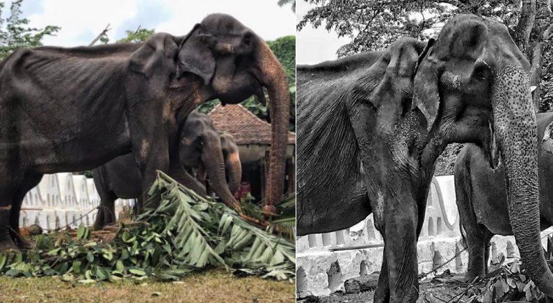 Facebook 'Save Elephant Foundation'