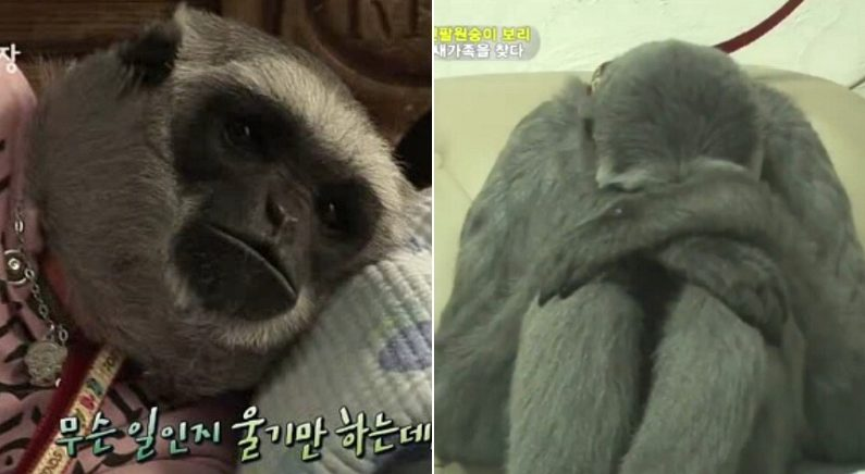 SBS '동물농장'