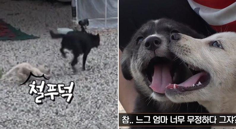 [좌] [우]SBS 'TV동물농장'