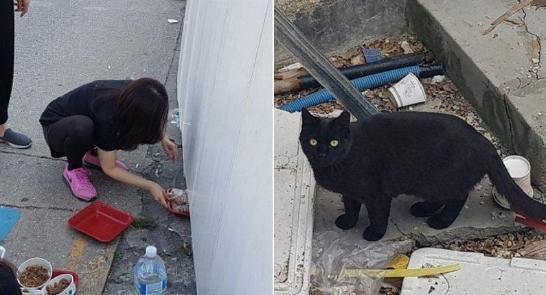 [좌] 동네고양이 서울연대, [우] 동물자유연대
