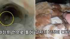 """""""길냥이가 불러서 한밤에 2km 따라갔다 새끼 여섯 마리를 구조했습니다"""" (영상)"""