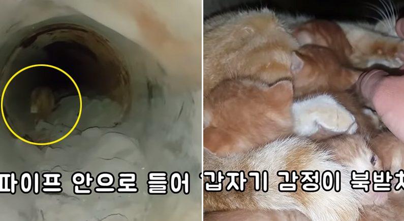 유뷰트채널 '매탈남'