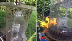 꿀벌 학살하는 '말벌 떼'에 분노해 '토치'로 한 방에 구워버린 양봉업자 (영상)