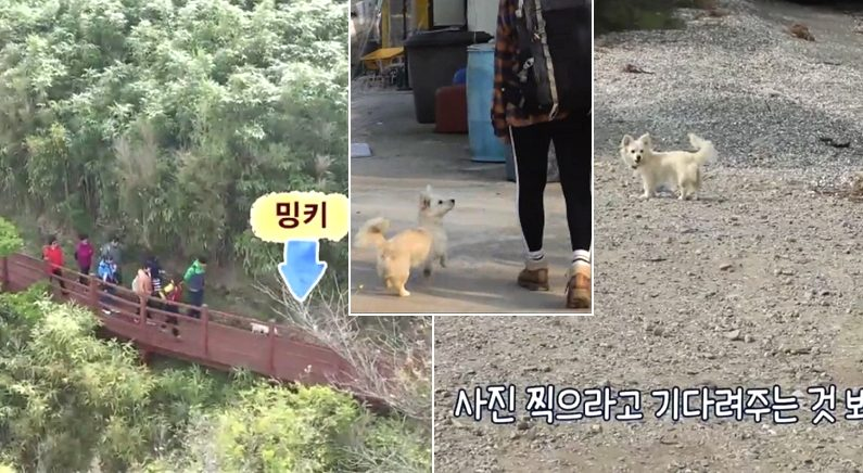 SBS 'TV 동물농장