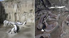 1만5천년 전 인류가 만든 '초대형 매머드 덫'이 발견됐다 (사진)