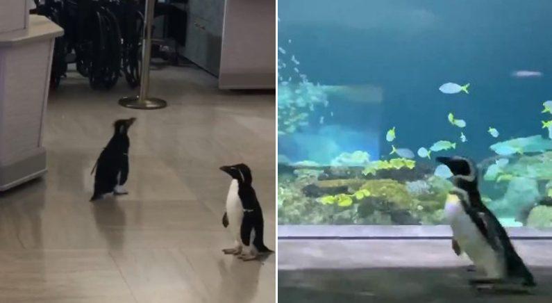 Twitter_@shedd_aquarium