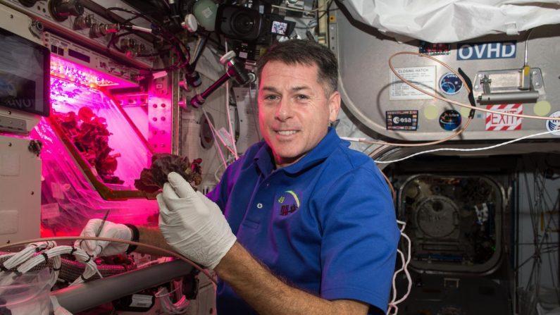 ISS 채소생산시스템 '베지'   NASA 제공