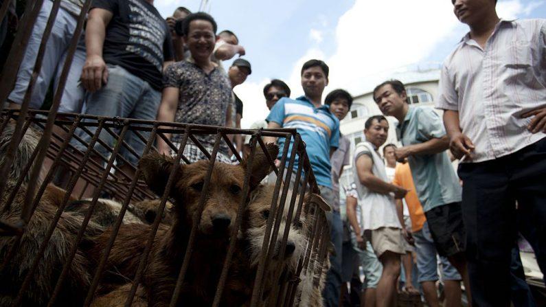 중국의 남부의 한 시장에서 개가 철창에 갇혀 있다. | STR/AFP via Getty Images