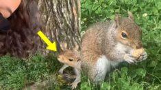 하루 만에 절친된 '인간 친구'에게 꽁꽁 숨겨둔 '보물창고' 알려준 다람쥐