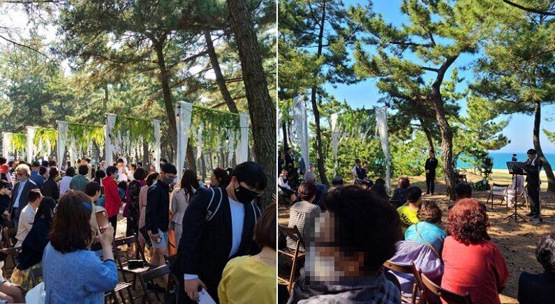 결혼식 당일 소나무 숲을 산책하던 시민이 촬영한 사진 / 네이버 블로그 캡처