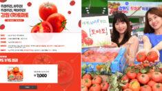 """""""4kg에 7000원"""" 강원도 토마토 대란, 다음 달 1일까지 판매된다"""