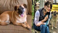 입양 10일 만에 집 나간 강아지 사연…3달 여정 끝에 만난 그리웠던 한 사람
