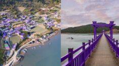 지붕과 도로, 주민 옷까지 마을 전체를 모두 보라색으로 깔맞춤한 '신안 퍼플섬'