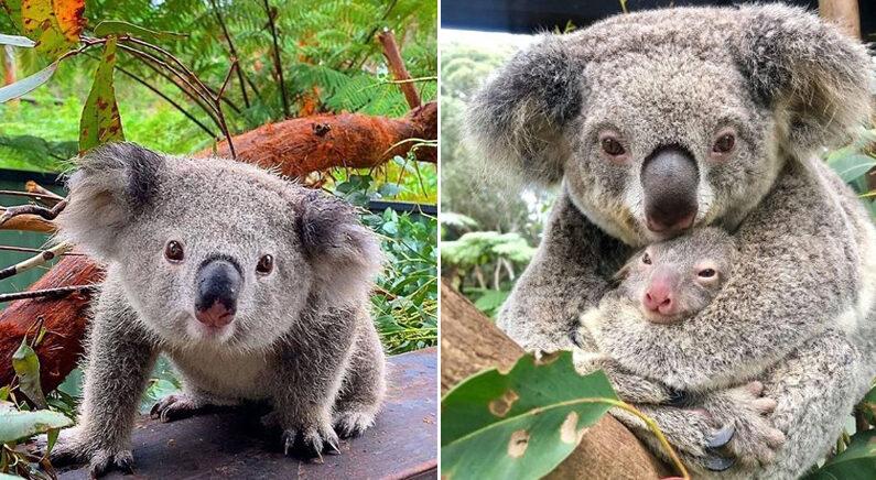 Instagram 'australianreptilepark'