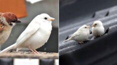 """""""보는 사람에게 행운 온다"""" 흰 참새들 나타나 난리 난 춘천 근황"""