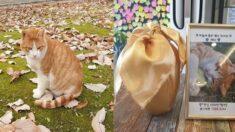 '출입금지냥'으로 유명세를 탔던 삼육대 길냥이 체다가 고양이별로 떠났다