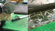 브로콜리 공장에서 손질할 때 바닥에 두드리는 충격적인 이유