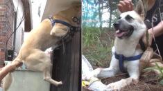 죽은 동생 너무 보고 싶었던 강아지가 주인이 꼬리 잡고 말려도 매일 가출한 이유