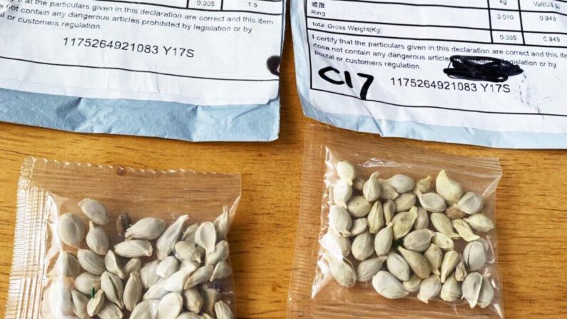 중국에서 배송된 정체불명의 씨앗들 | 워싱턴주 농업국