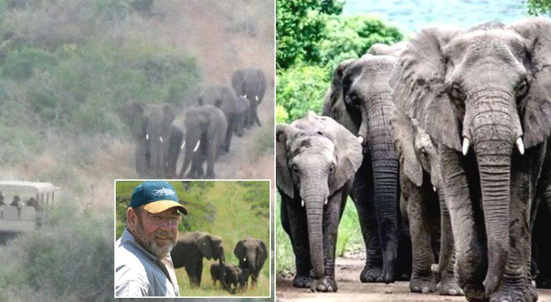 페이스북 'Fan of Lawrence Anthony : The Elephant Whisperer'