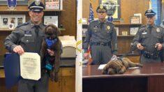 출근 첫날부터 경찰 간부들 근엄하게 회의하는데 책상에서 잠들어버린 탐지견