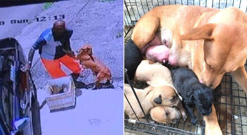 Kluang Johor Stray Dog Home