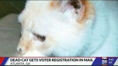 12년전 죽은 고양이 앞으로 날아든 '유권자 등록 신청서'…미 대선 우편투표 헛점