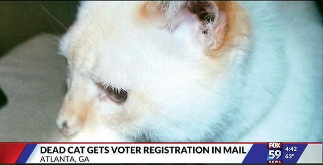 12년 전 죽은 고양이 이름 앞으로 날아온 유권자 등록 신청서를 보도한 미국 폭스뉴스 화면 | 영상 캡처