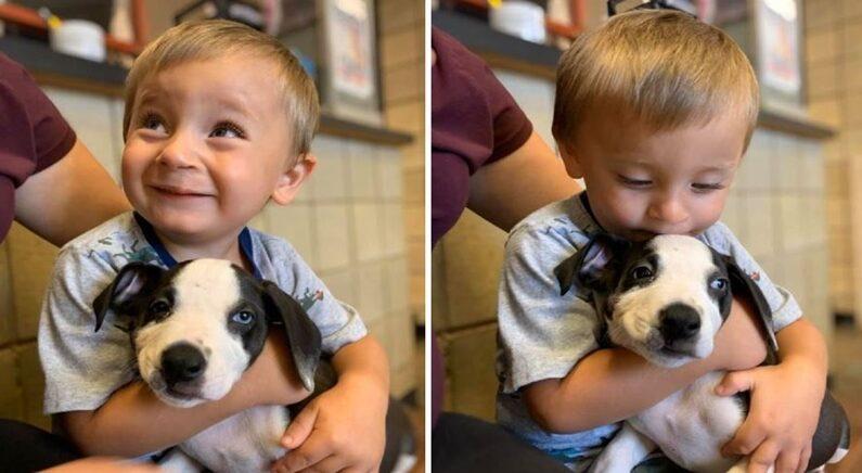'Jackson County Animal Shelter - Michigan' 페이스북