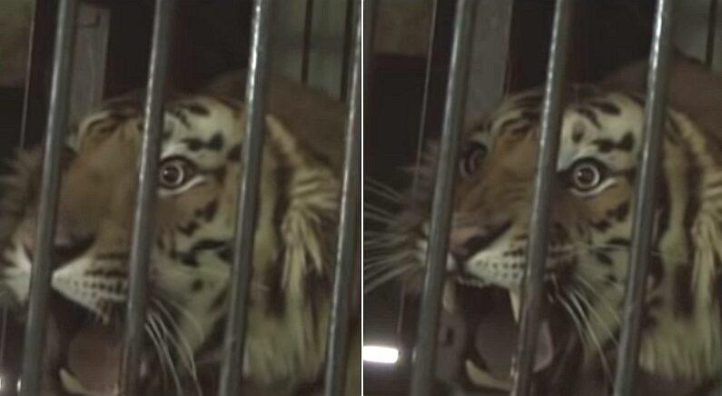 유튜브 'WildFilmsIndia'