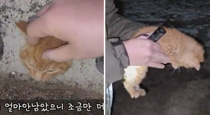 유튜브 '고양이탐정' 채널
