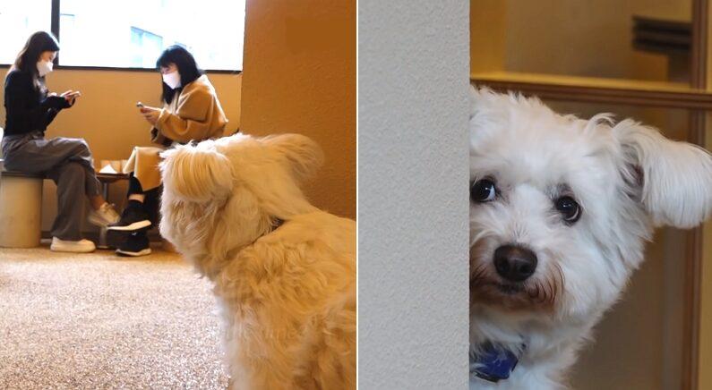 유튜브 'SBS TV동물농장x애니멀봐 공식 유튜브 채널입니다!'