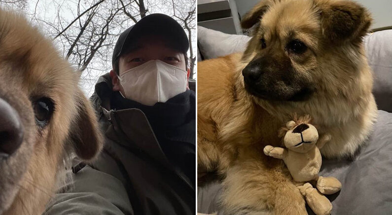 Instagram 'goseong_adoption'