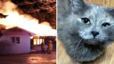 입양 한 달 된 아기 고양이, 불난 집에서 집사 가족 살리고 하늘나라 떠났다